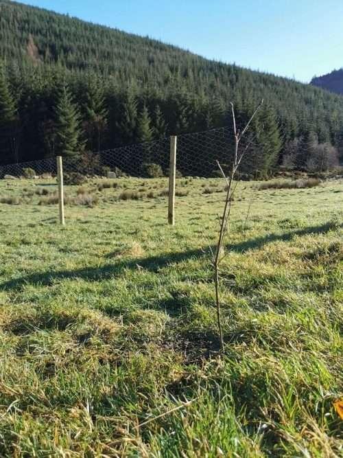 Growing Trees in Ireland