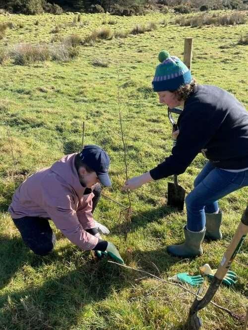 Tree Planting Subscription